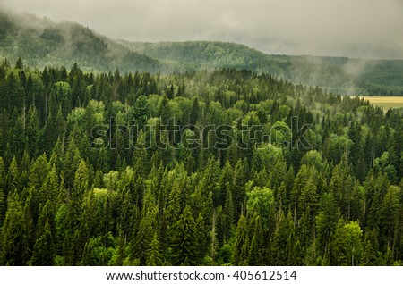 fog covered with thick coniferous forest  - stock photo