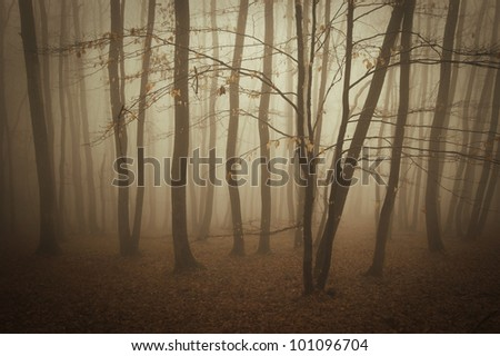 fog in a forest in summer - stock photo