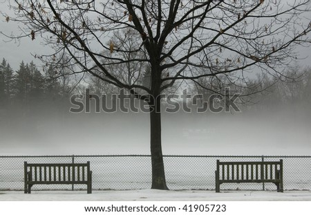 Fog in a park with two empty benches on either side of a tree.