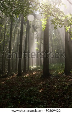 Fog in forest - stock photo