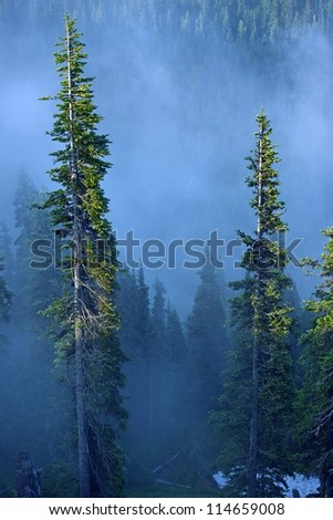 Fog in Forest. Foggy Forest of Hurricane Ridge, Olympic Peninsula. Olympic National Park, USA. Mountains Photo Collection. - stock photo
