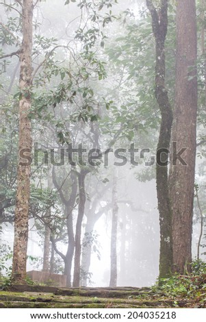 fog in highland tropical forest. - stock photo
