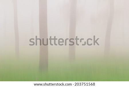 fog in highland tropical forest, Chaiyaphum Province, Thailand. - stock photo