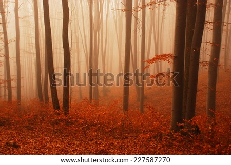 fog in the autumn forest - stock photo