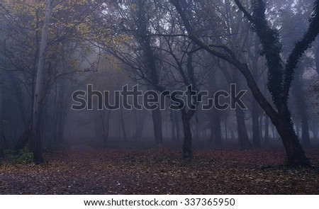 Fog in the forest an autumn day
