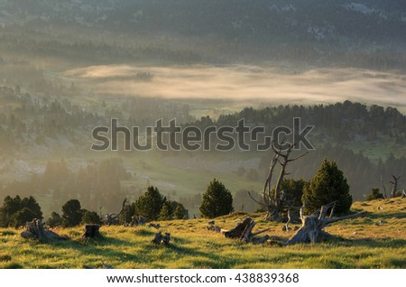 Fog in the forest of the French Vercors during a tranquil, summer sunrise.