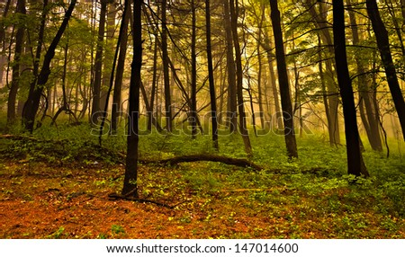 Fog in the forest, Shenandoah National Park, Virginia. - stock photo