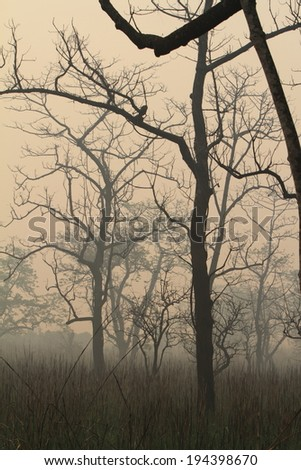 Fog in the Jungle of the Chitwan Nationalpark