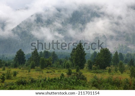 fog in the mountains and coniferous forest - stock photo