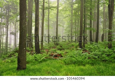 Fog in the spring green forest after the rain - stock photo
