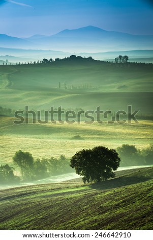 Fog in the valley at sunrise, Tuscany - stock photo
