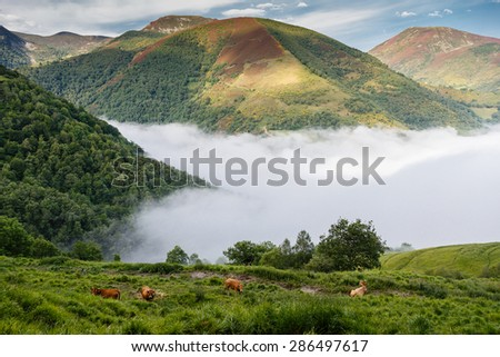 Fog in the valley of Leitariegos, Asturias, Spain