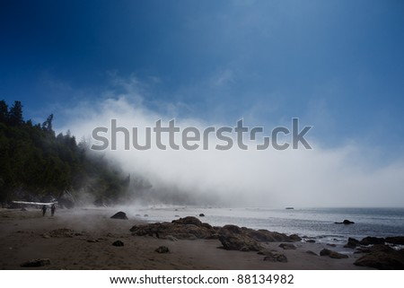 Fog lifts on a rocky beach with trees