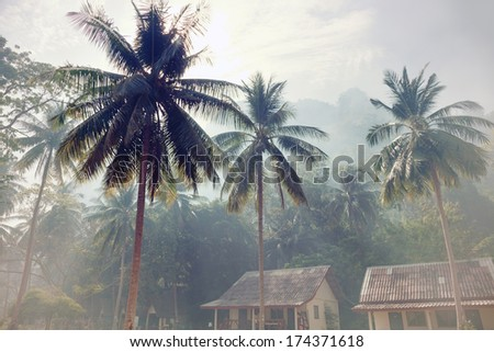fog morning in tropical village - stock photo