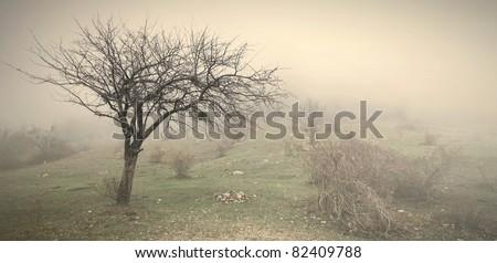 Fog on the field - stock photo
