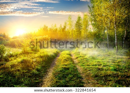 Fog over country road in birch grove - stock photo