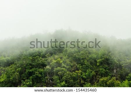 fog over fresh forest in Kanchanaburi, Thailand - stock photo
