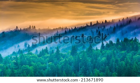 Fog over pine trees at sunrise, seen from Devil's Courthouse, near the Blue Ridge Parkway in North Carolina. - stock photo