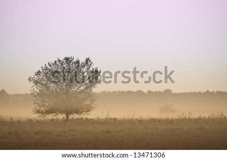 Fog over single tree and meadow. Early in the morning scene. - stock photo