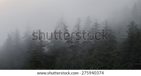 Fog over trees, Skeena-Queen Charlotte Regional District, Haida Gwaii, Graham Island, British Columbia, Canada
