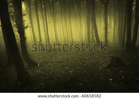 fog rising in a dark forest at morning - stock photo