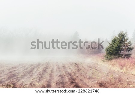 Fog rolling in on a plowed field in rural Prince Edward Island, Canada. - stock photo