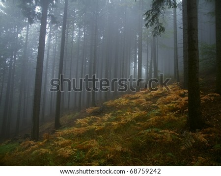 Fog's forest in polish mountains - stock photo