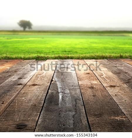 fog tree and floor  - stock photo
