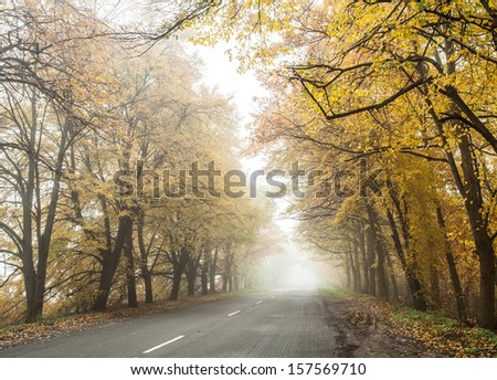 Foggy autumn countryside road. Perspective.