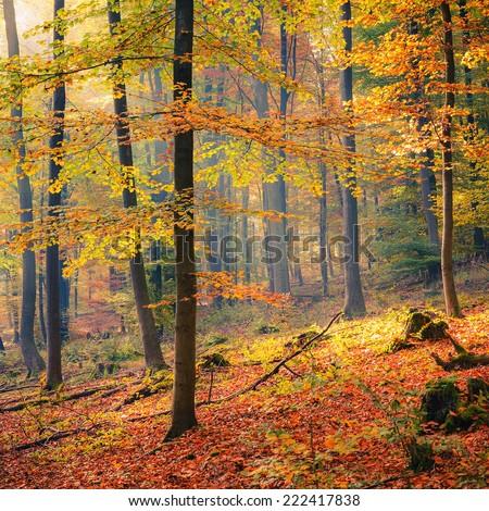 Foggy autumn forest - stock photo