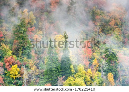 Foggy Autumn Forested Hillside North Carolina Southern Appalachian Blue Ridge Mountains - stock photo