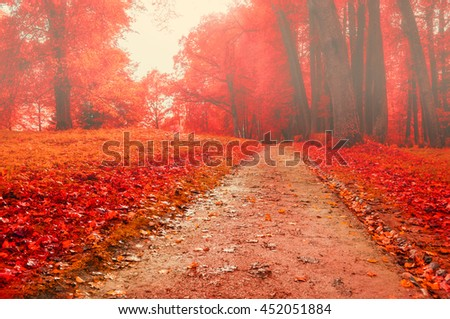 Foggy autumn landscape view of foggy autumn park with fallen autumn leaves, soft filter applied -beautiful autumn landscape in cloudy foggy weather with red autumn trees along lonely autumn alley - stock photo