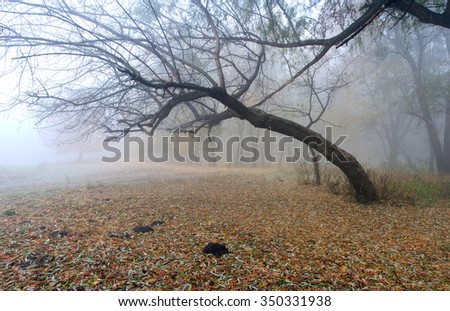 Foggy autumn morning in the city park - stock photo