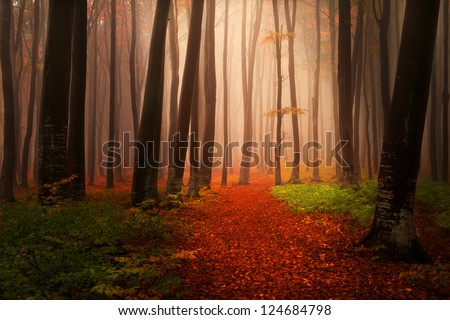 Foggy autumnal day into the forest during a day in November - stock photo