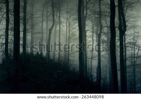 Foggy dark forest with a black slope - stock photo