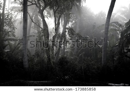 Foggy darkened path leading through the bare trees of a park - stock photo