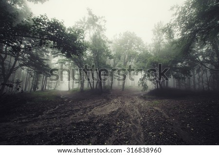 foggy day in forest - stock photo