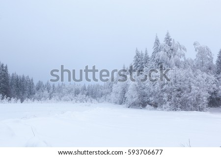 Foggy day in the forest glade. Winter landscape