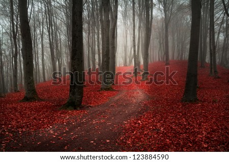 Foggy day into the forest during autumn - stock photo