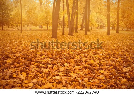 Foggy evening in the autumn city park. - stock photo