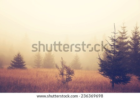 Foggy field - stock photo