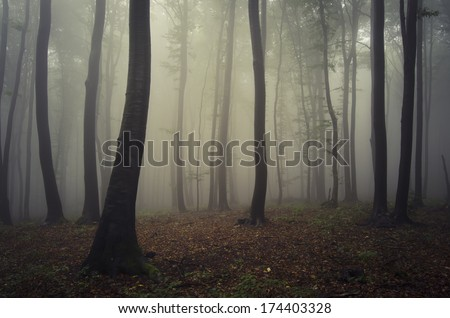 foggy forest after rain - stock photo