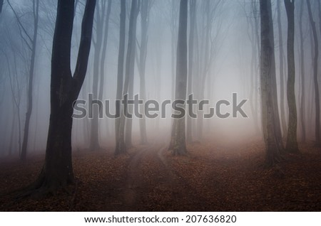 foggy forest after rain in autumn - stock photo