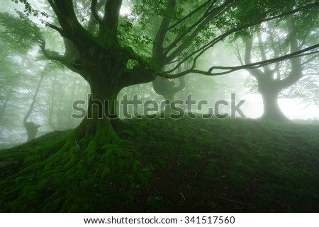 foggy forest at the spring