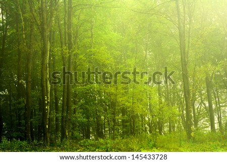 Foggy forest during a spring day - stock photo