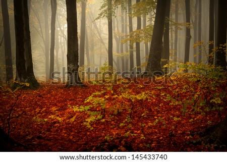 Foggy forest during an autumn day - stock photo