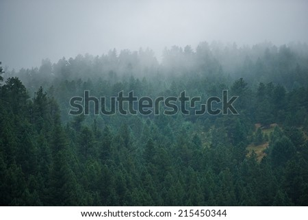 Foggy Forest Hill. Fogy Mountain Weather - stock photo