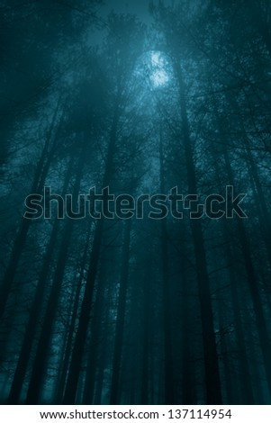 Foggy forest in a full moon night - stock photo