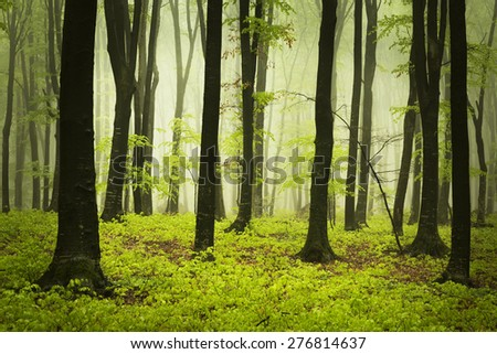 Foggy forest in a spring day
