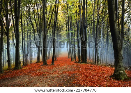 Foggy forest in an autumn day - stock photo